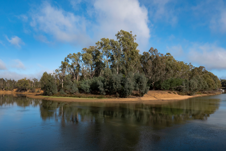 Echuca Moama Murray River. Photo of a river bank covered in native Australian trees along the Murray River